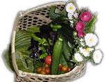 キャンドル農園で収穫された野菜と花